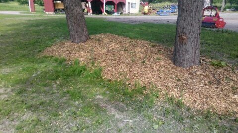 Med hjälp av flis kan man snygga till områden under träden.