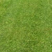 Nurmikon ruohonleikkuu ja viheralueiden trimmaus onnistuu tilauksesta