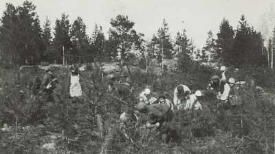 Kartanon väkeä mäntytaimikossa vuonna 1932.